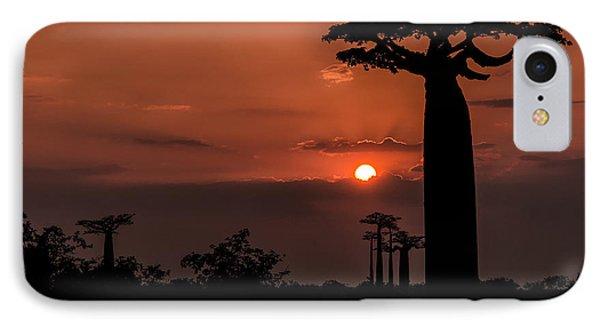 Baobab Sunrise IPhone Case by Linda Villers