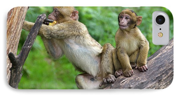 Barbary Macaques IPhone 7 Case by Nigel Downer