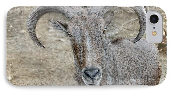 IPhone Case featuring the photograph Barbary Sheep by Dyle   Warren