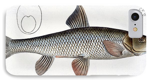 Barbel Phone Case by Andreas Ludwig Kruger