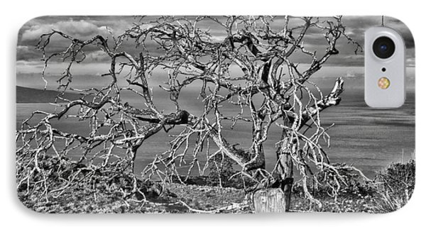 Bare Tree In Hana IPhone Case