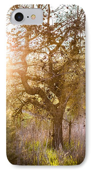 Bare Tree Phone Case by Mike Lee