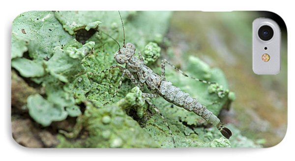 Bark Mantis Nymph Camouflage IPhone Case by Melvyn Yeo