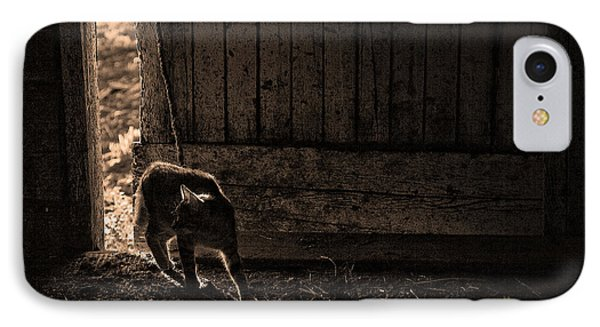 Barn Cat IPhone Case by Theresa Tahara