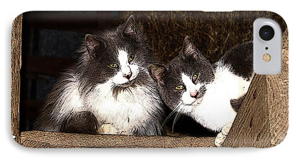 Barn Cats IPhone Case by TnBackroadsPhotos