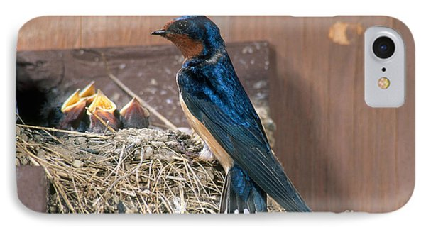 Barn Swallow At Nest IPhone Case by Anthony Mercieca