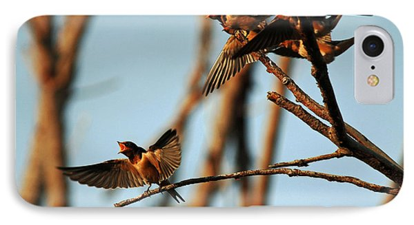 Barn Swallow Babies IPhone Case