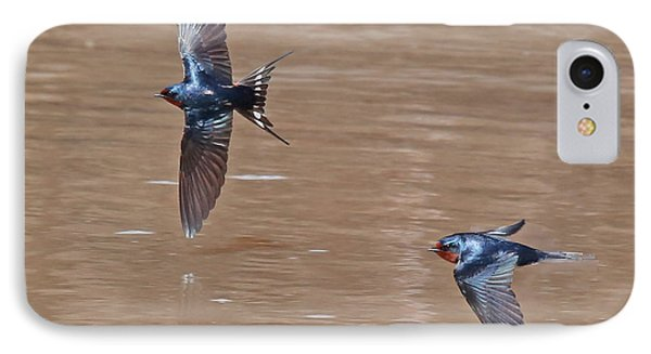 Barn Swallow In Flight IPhone Case by Mike Dickie