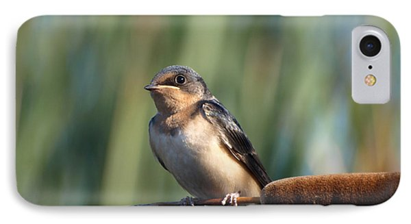 Barn Swallow IPhone Case by James Peterson