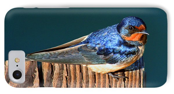 IPhone Case featuring the photograph Barn Swallow Perching by Bob and Jan Shriner