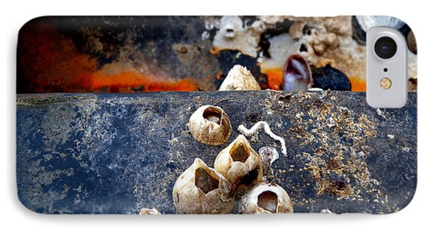 Barnacles IPhone Case by Robert Riordan