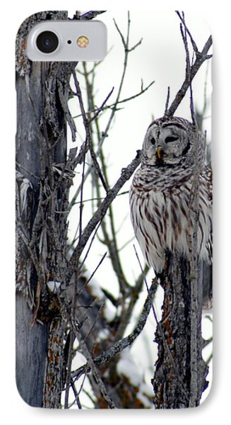 Barred Owl 2 IPhone Case