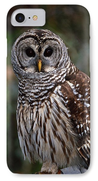 IPhone Case featuring the photograph Barred Owl by Bradford Martin