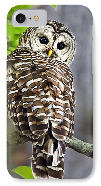 Barred Owl Phone Case by Christina Rollo