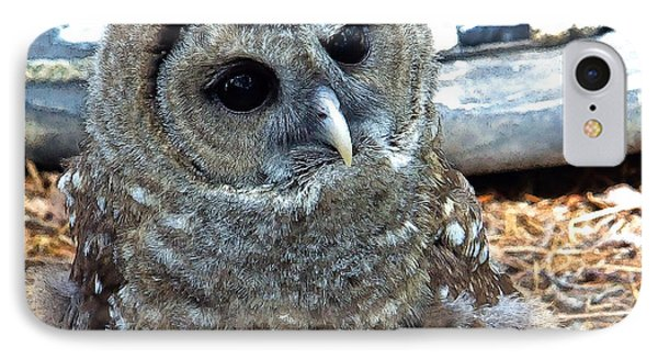 IPhone Case featuring the photograph Barred Owl by Constantine Gregory