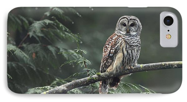 Barred Owl  IPhone Case by Daniel Behm