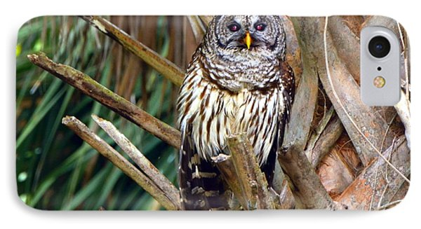 Barred Owl In Palm Tree IPhone Case by Jodi Terracina
