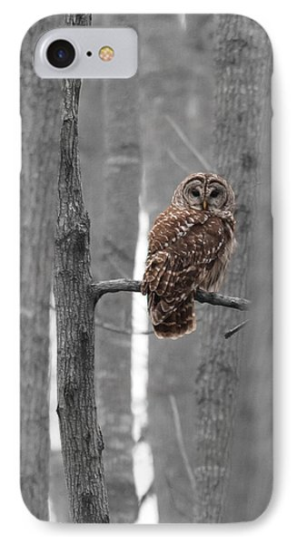 Barred Owl In Winter Woods #1 IPhone Case