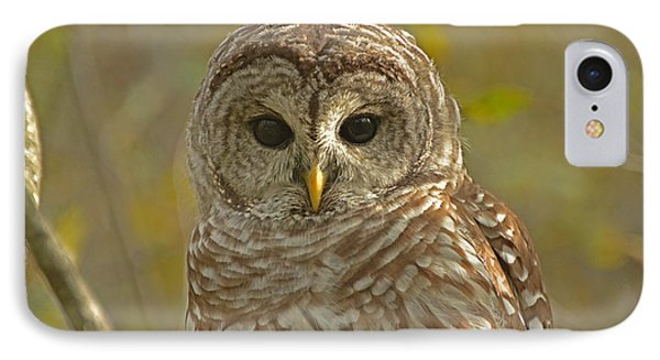 Barred Owl Looking At You IPhone Case by Nancy Landry