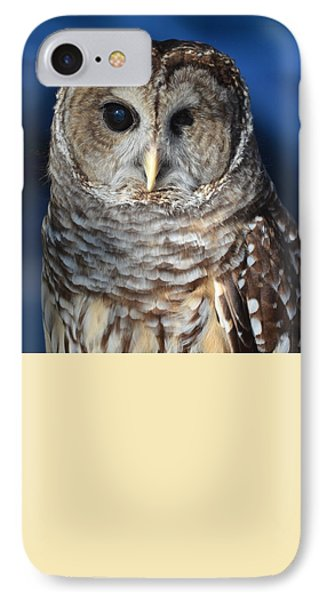 Barred Owl IPhone Case by John Latham