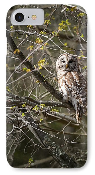 Barred Owl Portrait Phone Case by Bill Wakeley