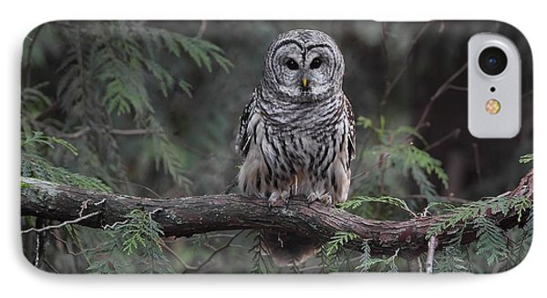Barred Owl Stare Down IPhone Case by Daniel Behm
