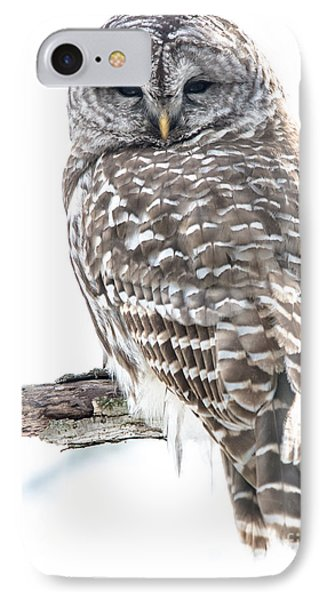 Barred Owl2 IPhone Case by Cheryl Baxter