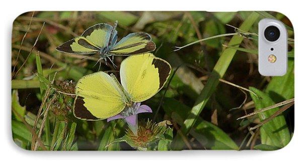 Barred Yellow Butterflies IPhone Case