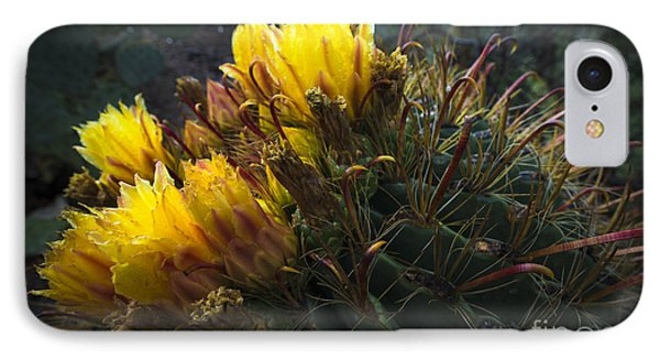 Barrel Cactus In Bloom 1 IPhone Case by Richard Mason