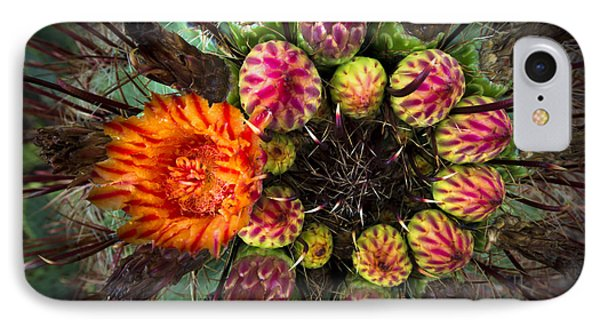 Barrel Cactus In Bloom 2 IPhone Case by Richard Mason