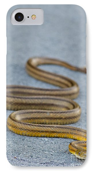 Basking Florida Yellow Rat Snake IPhone Case by Natural Focal Point Photography
