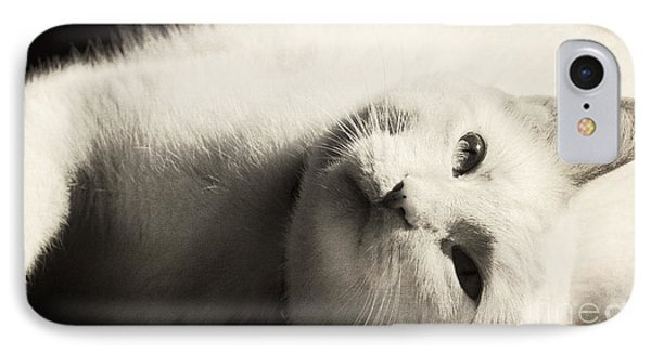 Basking In The Sun IPhone Case by Pam  Holdsworth