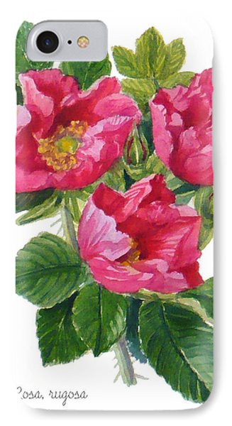Beach Roses -  Rosa Rugosa IPhone Case by Janet  Zeh