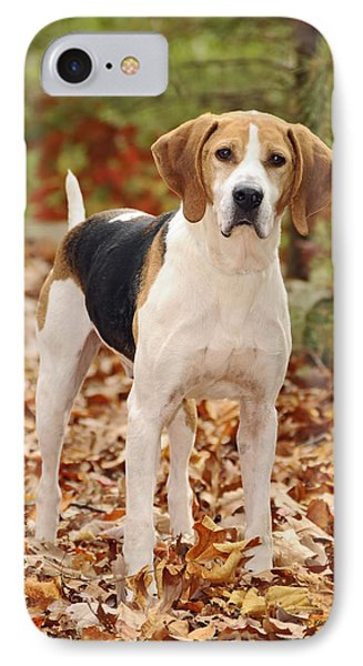 Beagle IPhone Case by Kenny Francis