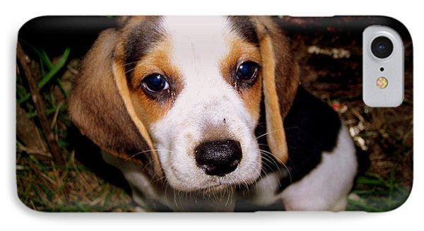 Beagle Puppy 2 Phone Case by Lynn Griffin