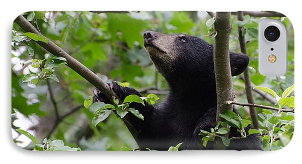 Bear Cub And Apples IPhone Case