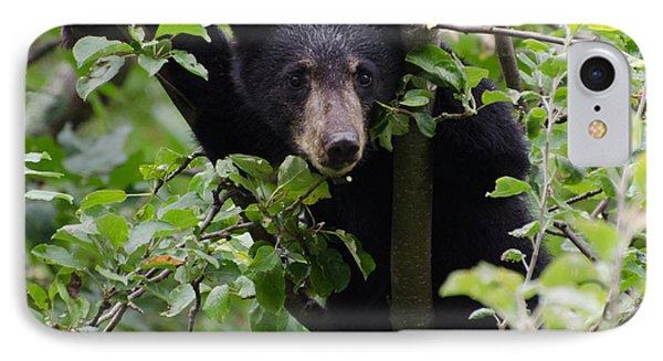 Bear Cub In Tree IPhone Case