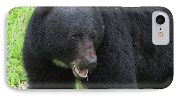 IPhone Case featuring the photograph Bear by Rod Wiens