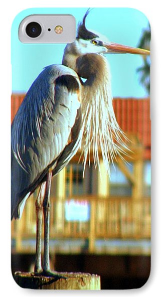 IPhone Case featuring the photograph Bearded Great Blue Heron by Antonia Citrino
