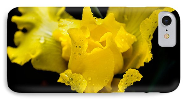 Bearded Iris Morning Dew IPhone Case by Mary Ward