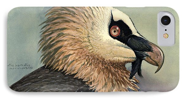 Bearded Vulture IPhone Case by Rob Dreyer