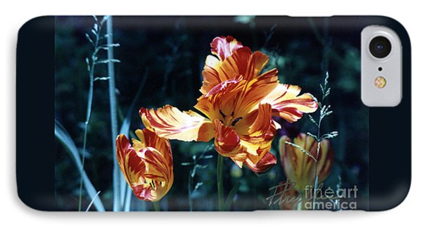 IPhone Case featuring the photograph Gorgeous Tulip by Phyllis Kaltenbach