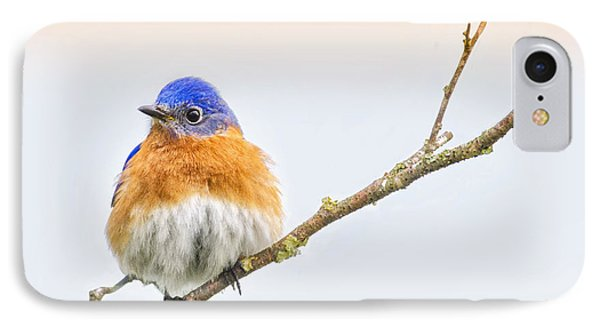 Beautiful Bluebird IPhone Case