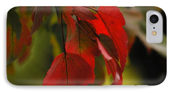 IPhone Case featuring the photograph Beautiful Branch 2 by Lena Wilhite