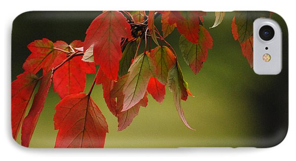 IPhone Case featuring the photograph Beautiful Branch by Lena Wilhite