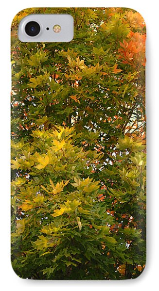 IPhone Case featuring the photograph Beautiful Branches by Lena Wilhite
