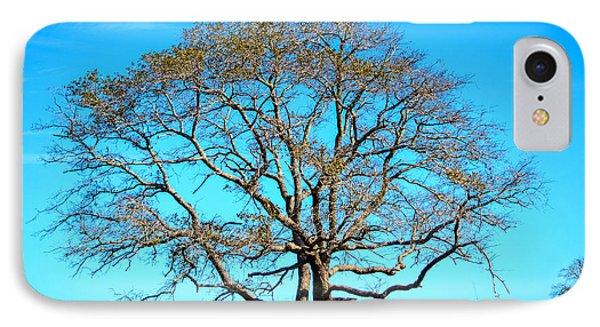 Beautiful Branching IPhone Case by Debra Martz