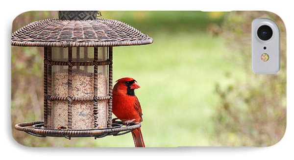 IPhone Case featuring the photograph Beautiful Cardinal by Trina  Ansel