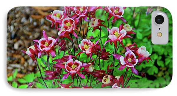 Beautiful Columbine   IPhone Case by Ed  Riche