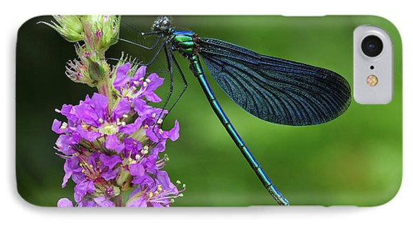 Beautiful Demoiselle Male Switzerland IPhone Case by Thomas Marent